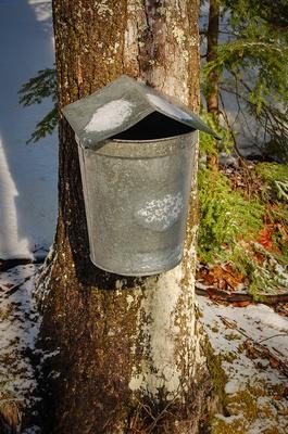 Galvanized Maple Sap Bucket