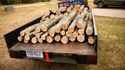 Fresh Cut Shiitake Logs